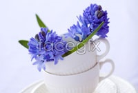 Link toPurple flowers hd picture