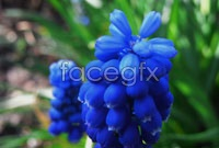 Link toPurple flowers high definition pictures