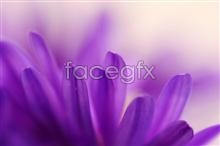Link tomaterial picture flowers Purple