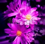 Link toPurple flowers psd