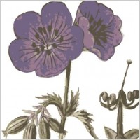 Link toPurple flowers