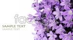 Link toPurple lily flower psd