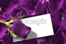 Link topicture card greeting rose Purple