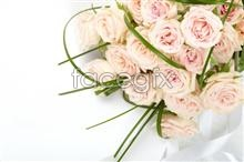 Link toPurple roses pictures hd
