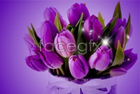 Link toPurple tulip flower pictures hd