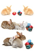 Link toRabbit pictures hd psd