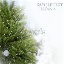Link topictures background trees christmas green Real