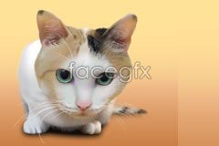 Link tovector cat little cute style Realist