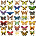 Link toRealistic butterfly vector