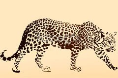 Link tovector leopard and leopard Realistic