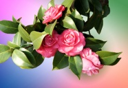 Link toRed camellia picture download