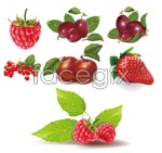 Link toRed fruit vector
