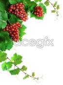 Link toRed grapes close-up psd