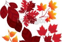 Link toRed leaf vector graphics