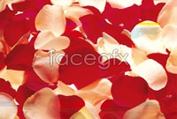 Link toRed petal high definition pictures