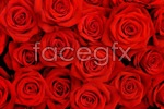 Link toRed rose background psd