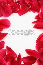 Link toRed rose petals psd
