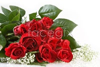 Link toRed roses hd picture