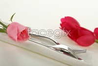 Link toRed tulip flowers hd picture