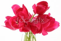 Link toRed tulips hd picture