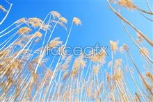 Link topicture scenery sky Reed