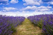 Link topictures definition high lavender Roadside