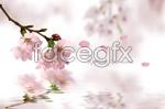 Link toRomance blossoms psd