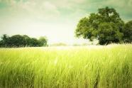 Link toRomantic prairie hd picture material