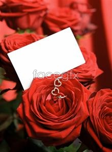 Link tophotos roses Romantic