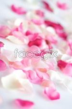 Link toRose petals psd