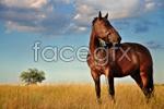 Link toRunning horse psd