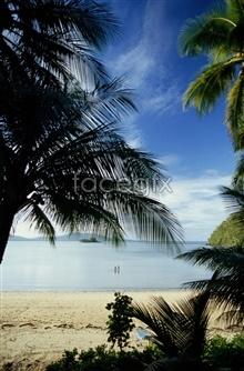 Link topicture scenery trees coconut beach Sanya
