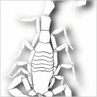 Link toScorpion papercut silhouette vector