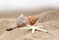 Link toSea shells on the beach hd pictures