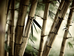 Link toSecluded bamboo picture material