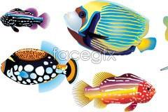vector fish marine colored brightly Several