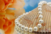Shell pearl necklace high definition pictures