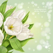 Link toShiny white tulips vector background graphics free