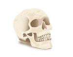 Link toSimulation of skulls vector