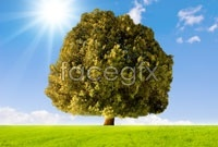 Link toSky meadow tree high definition pictures
