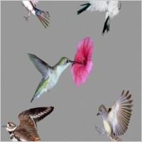Link toSmall birds psd