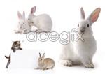 Link toSmall rabbit psd