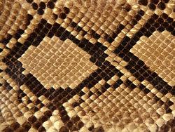 Link toSnake skin texture 05-hd pictures