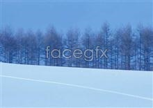 301 Snow