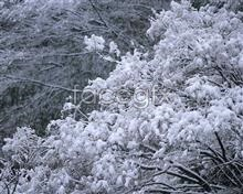 Link topictures definition high forest Snow