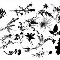 Link toSp3ktr floral