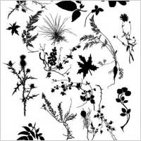 Link toSp3ktr_floral