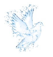 Link toSpray formed dove pattern picture