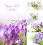 Link toSpring flower psd