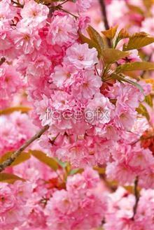 Link toSpring flowers